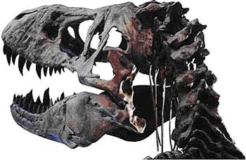 dna dating methods for fossils