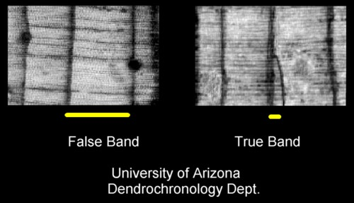 """radiocarbon dating tree rings Basics of radiocarbon dating the term """"radiocarbon"""" is commonly used to denote 14c, an isotope of carbon  tree rings the tree rings that match,."""